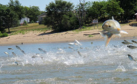 Clock Ticking on Keeping Asian Carp Out of The Great Lakes