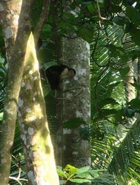 costaricatree